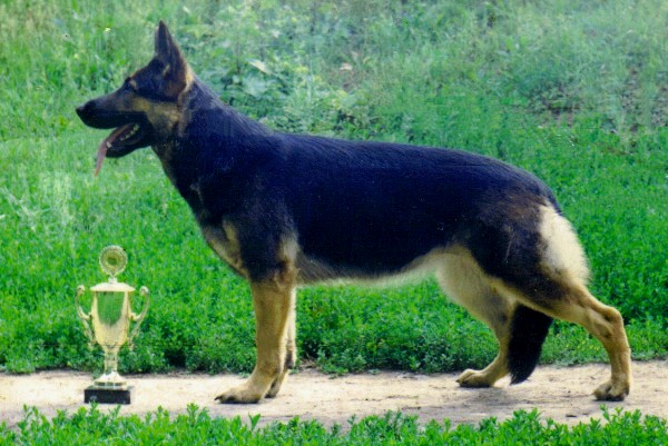 East-European Shepherd: Photo #7