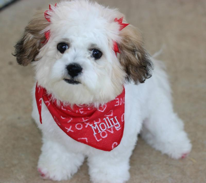 Shichon: Photo #10