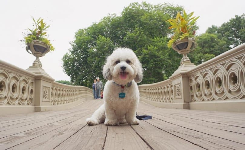 Shichon: Photo #11