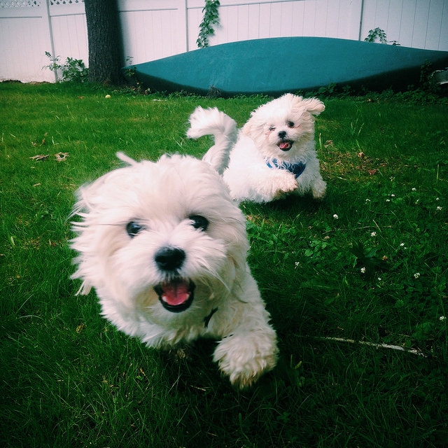 Shichon: Photo #6