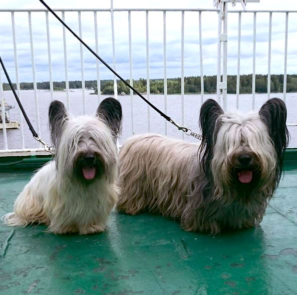 Skye Terrier: Photo #10